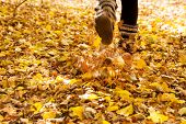 image of walking dead  - Walking through the autumn leaves - JPG