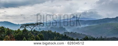 Panorama of cloudy morning in hills with lonely tree on sunrise in hills. Kerala, India