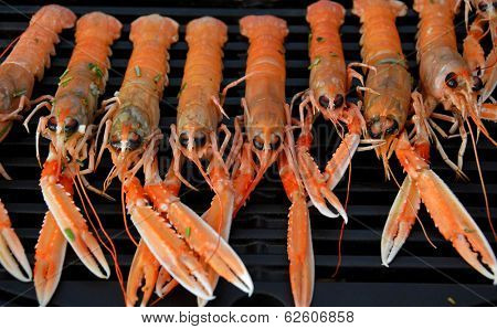 Delicious Grilled Scampi in a row