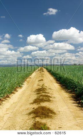 Australian Gravel Road