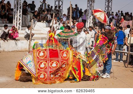 PUSHKAR, INDIA - NOVEMBER 22, 2012: Man decorating his camel for camel decoration contest at Pushkar camel fair (Pushkar Mela) - one of the world's largest camel fairs and tourist attraction