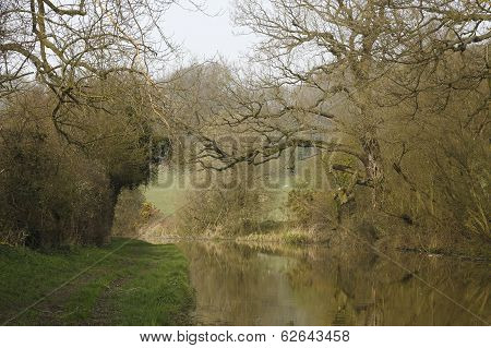 The tree lined Canal