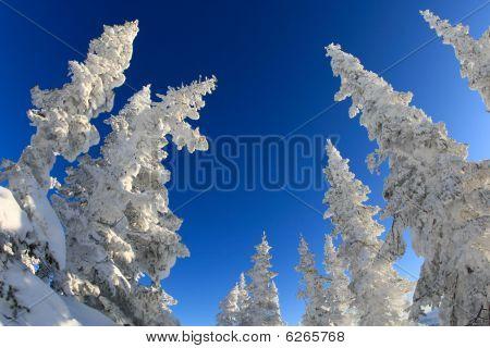 magischer Bäume