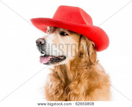 Beautiful Retriever redhead in red cowboy hat isolated on white background