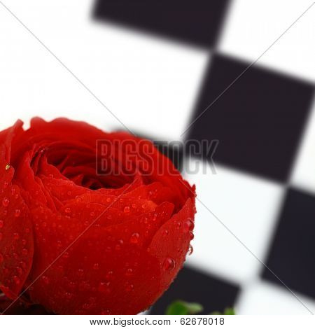 Beautiful wet red flower vertical background