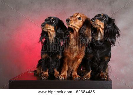 Three funny dogs