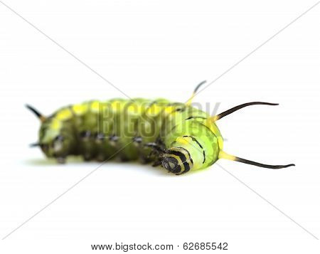 A Cute Green Worm, Cute Butterfly Worm Sleeping And Lying On The White Background