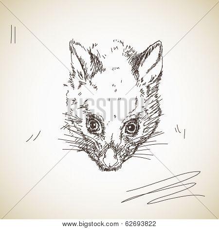 Vector sketch possum muzzle