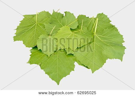 Wine Leaves Isolated On White
