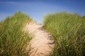 picture of dune grass  - Sand path over dunes with beach grass in North Rustico - JPG