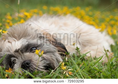 Puppy Is Playing With The Flowers