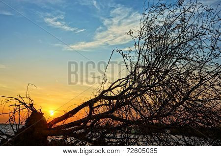 Amazingdry Tree Trunk In Silhouette, Sunset Summer