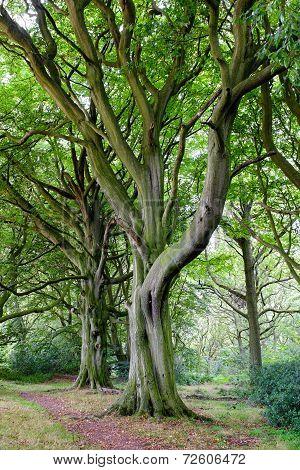 Elegant trees