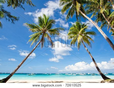 Palms On Tropical Beach