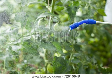 Watering Of Plants
