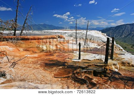 Canary Spring Against Blue Sky In Yellowstone National Park