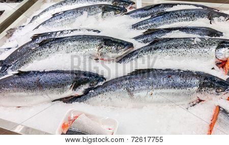 Fresh Norwegian Salmon On Ice Ready To Sale