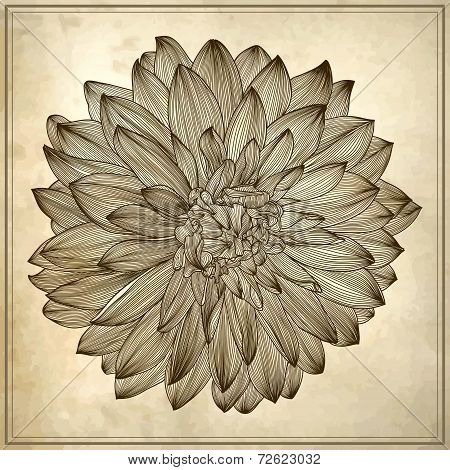 drawing of dahlia flower on grunge background
