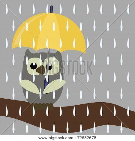 nice owl with umbrella