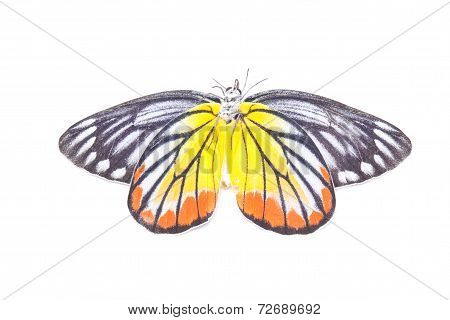Yellow Red Butterfly (painted Jezebel) Isolated On White.
