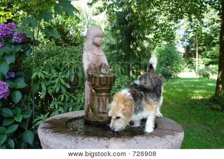 Franzi Drinking From Fountain