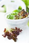stock photo of spinner  - Salad spinner with iceberg and red lettuce diet concept