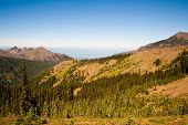 stock photo of olympic mountains  - Hurricane Ridge in the Olympic National Park - JPG