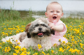 foto of buttercup  - Sweet baby girl and puppy in a field of buttercups - JPG
