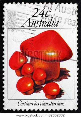 Postage Stamp Australia 1981 Cortinarius Cinnabarinus, Mushroom