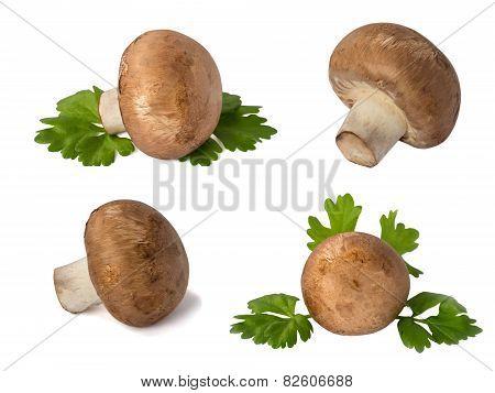 Set Of Mushrooms Champignon  Isolated On White