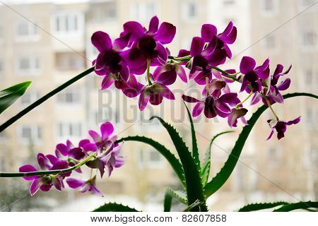 Close Up Picture Of A Orchid On A City Background