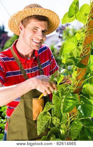 Man growing vegetables in garden