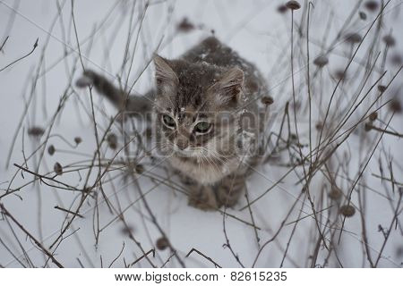 Beautiful Kitten In The Snow And Dry Grass