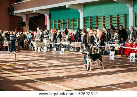 People and dogs visit Palace athletics exhibition  -Internationa
