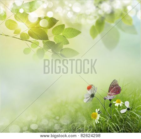 Beauty natural spring background with daisies.