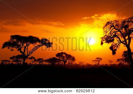 African sunset in Masai Mara