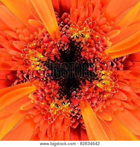 Orange Flower Center Collage Geometric Pattern