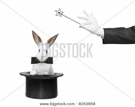 A rabbit in a hat and hand holding a magic wand