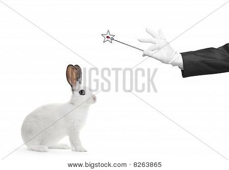 A rabbit and hand holding a magic wand