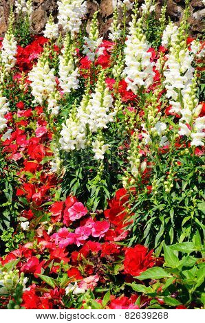 Snapdragons and Begonias.