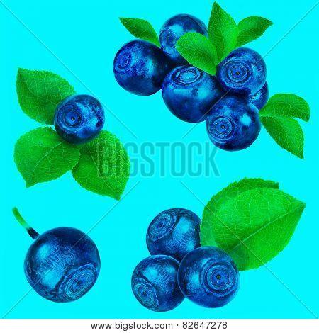 blueberry collection set closeup macro isolated on aqua background