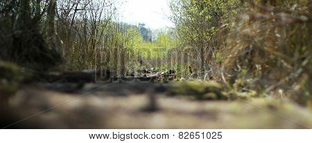 Kieshofer Moor