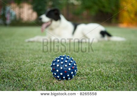 Ball For The Dog