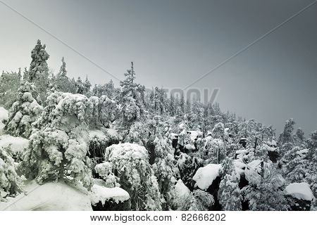 Snow Covered Mountainside Forest Disappearing In Fog On The Horizon
