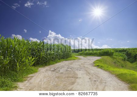 rural road with sky and corn field background