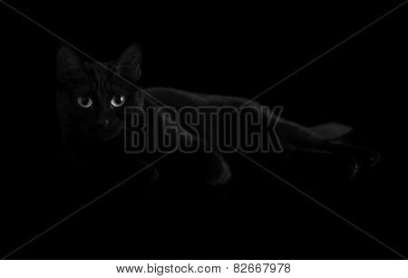 Beautiful black cat with striking eyes fading into shadows, in black and white