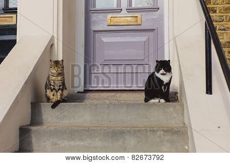 Two Cats Sitting On The Stoop Outside House