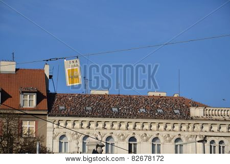 Roof Covered With Pigeons Flock