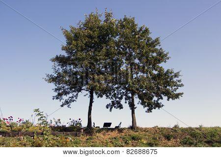 Bench Below Trees