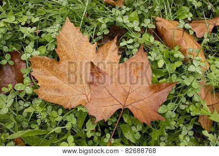Leaves Couple